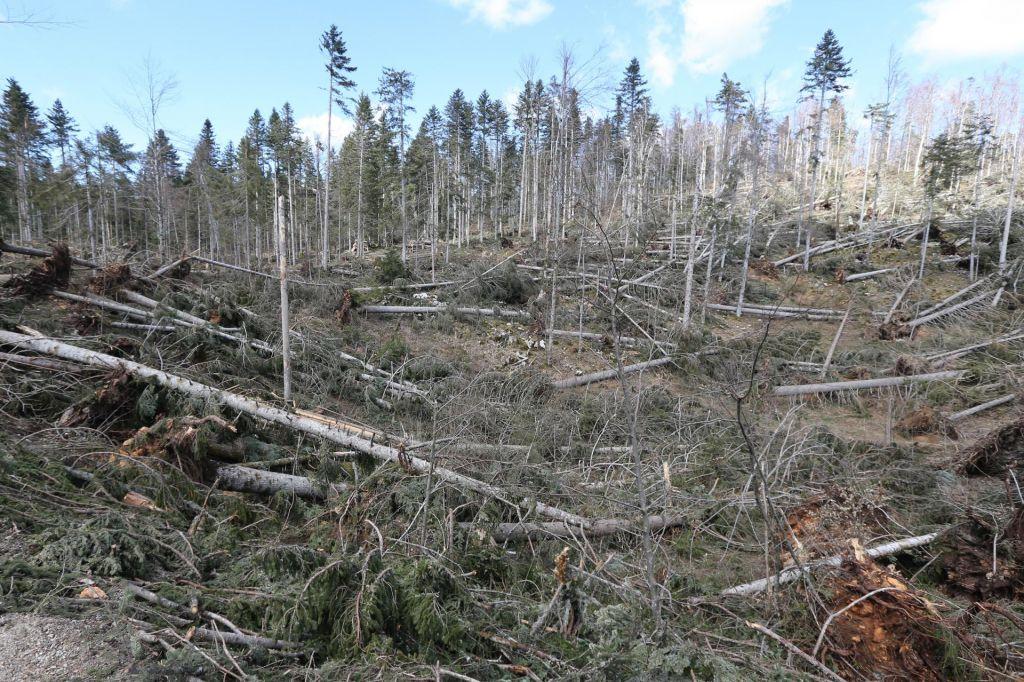 FOTO:Prihodnjo soboto bodo po Sloveniji sadili drevesa