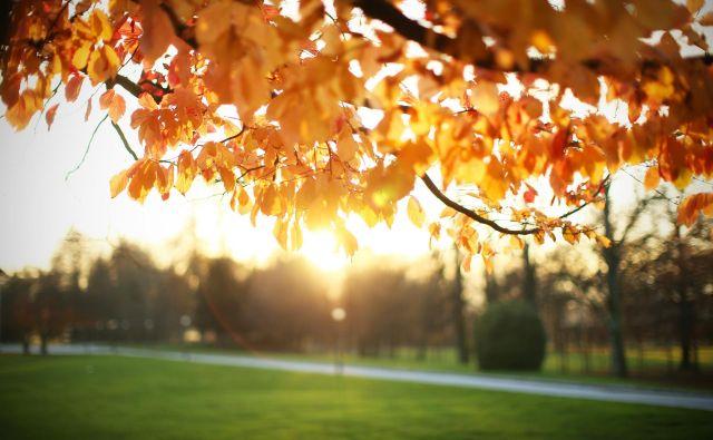 Letošnja jesen je bila nadpovprečno topla. FOTO: Jure Eržen/Delo