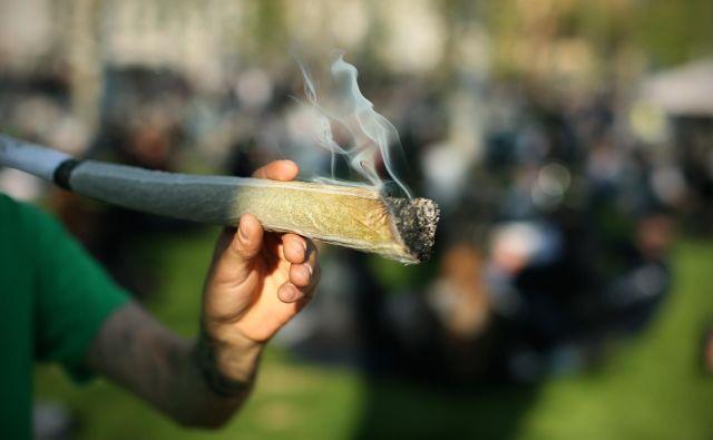Kljub znanju angleščine in spletu mladostniki, okuženi z neizživetimi hrepenenji staršev, preprosto »ne vidijo« sporočil o tveganju, da z uživanjem marihuane lahko izzovejo razvoj resne duševne motnje, predvsem shizofrenije. FOTO: Jure Eržen