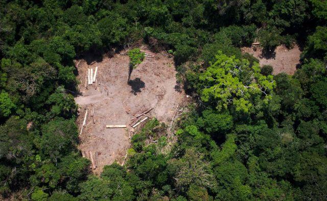 Tla absorbirajo skoraj tretjino ogljičnih izpustov, ki nastanejo pri kurjenju fosilnih goriv in v industriji. A njihova sposobnost vpijanja toplogrednih plinov ni neskončna. FOTO: Raphael Alves/AFP