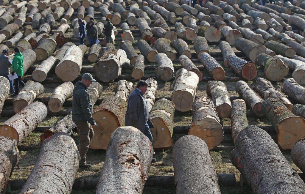 Po lepljene lesene plošče kmalu na Koroško