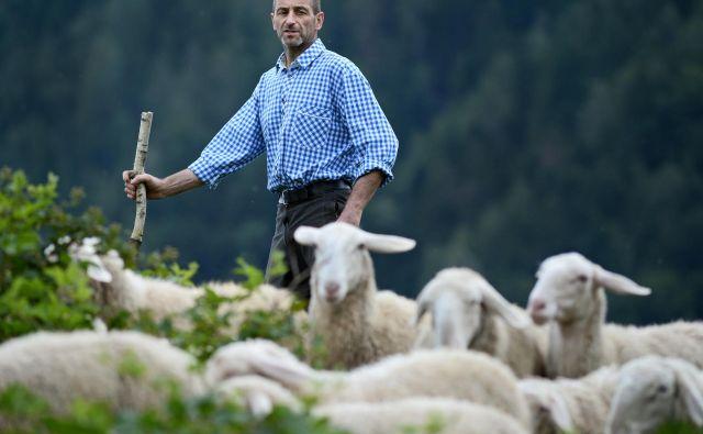 O drobnici bo govor. O ovcah in pastirjih ter o tem, kdo ali kaj smo mi. FOTO: Matej Družnik/Delo