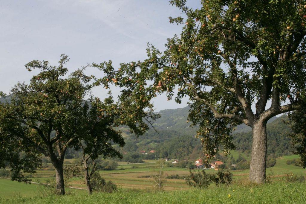 Pestrost kmetijske krajine je ključna za biotsko pestrost
