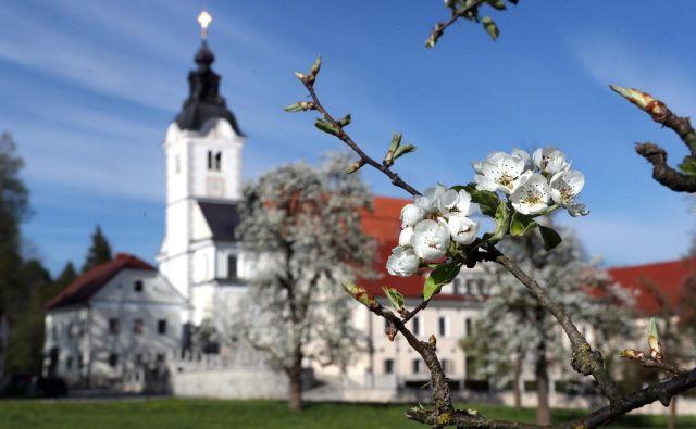 Cerkev sv. Petra v sedanji baročni obliki so začeli graditi leta 1726 na mestu prejšnjih dveh cerkva pod pokroviteljstvom barona Petra Testaferrate; zidal je Gregor Maček mlajši. Fotoo Dejan Javornik