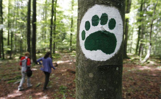Petega maja je medved med vasema Klada in Želimlje napadel pohodnika. Razlog za napad je bilo presenečenje, saj je moški medveda nehote presenetil od zadajna zelo kratki razdalji.FOTO: Leon Vidic