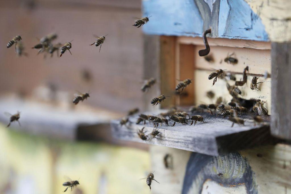 FOTO:Ne le praznik čebel, temveč vseh opraševalcev