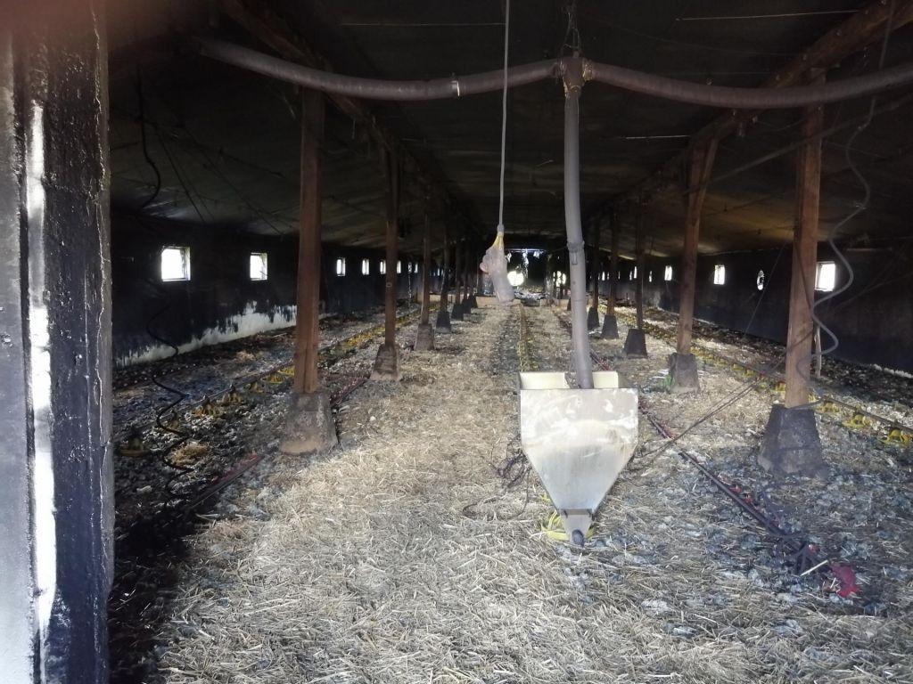 Za pogin piščancev kriva plinska peč?