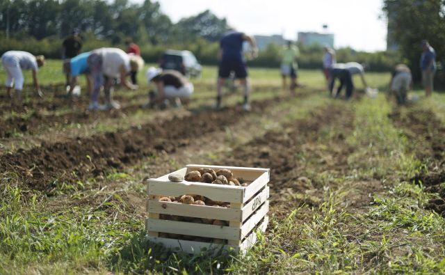 Slovenija je ohranila obseg sredstev za neposredna plačila in razvoj podeželja, pri zadnjem ji je grozil 15-odstotni rez. FOTO: Leon Vidic/Delo