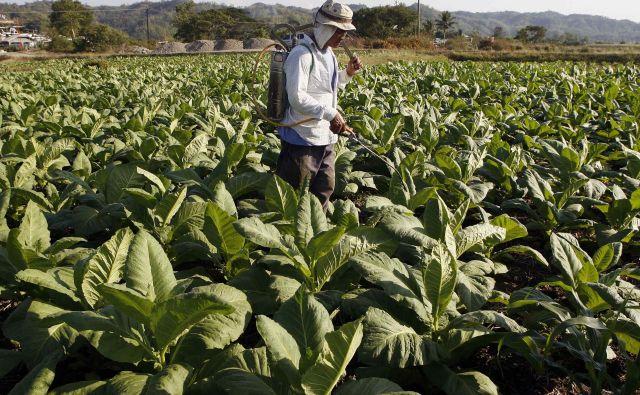 Čeprav zakonodaja kmete obvezuje, da morajo natančno zapisovati podatke o porabi pesticidov, so države dolžne te podatke v Bruselj pošiljati le vsakih pet let. FOTO: Romeo Ranoco/Reuters