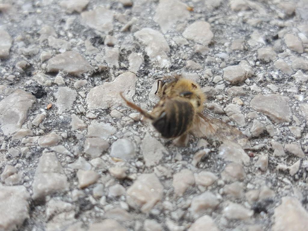 Zakaj so v Klečah z neba deževale čebele?