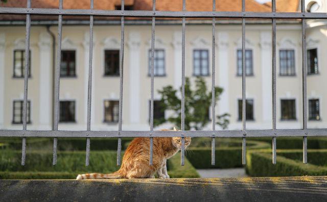 Vseslovenske akcije sterilizacije in kastracije brezdomnih živali po znižanih cenah tudi letos ne bo. FOTO: Uroš Hočevar