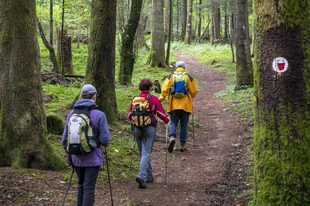 FOTO:Sprehod po gozdu in skozi prazgodovino