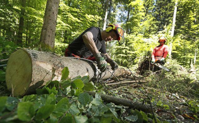 Nadzor nad območjem, kot za zasedajo naši gozdovi, je nemogoč. FOTO: Leon Vidic