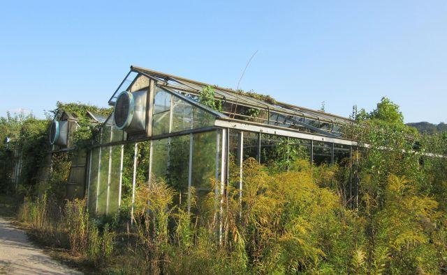 Opuščene rastlinjake bodo zaradi izgradnje nasipa odstranili. FOTO: Špela Kuralt/Delo