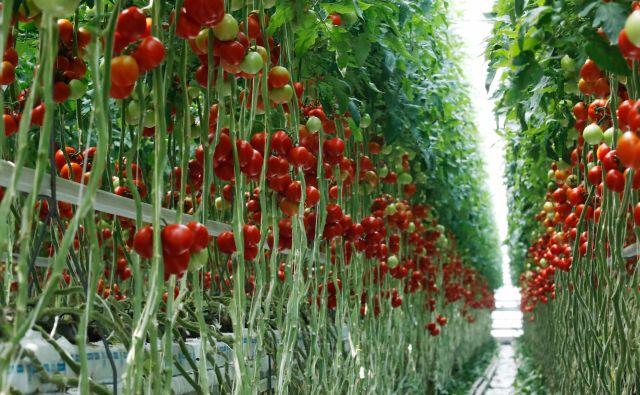 Sodobno kmetijstvo in skrb za okolje sta tesno prepletena. FOTO: Uroš Hočevar/Delo<br />