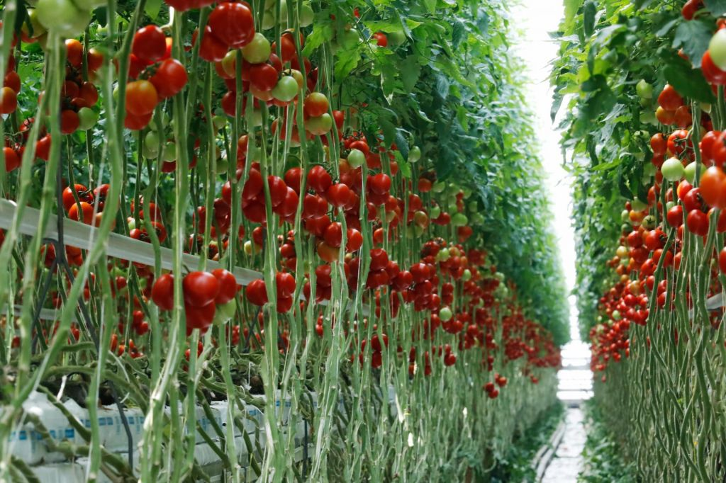 Nemško redčenje zelenih ambicij kmetijstva