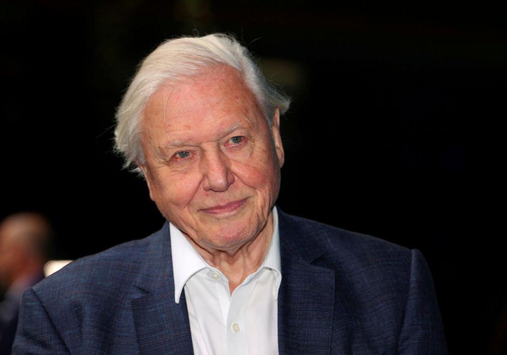 Attenborough je med pandemijo sedel na vrtu in se pridružil instagramu