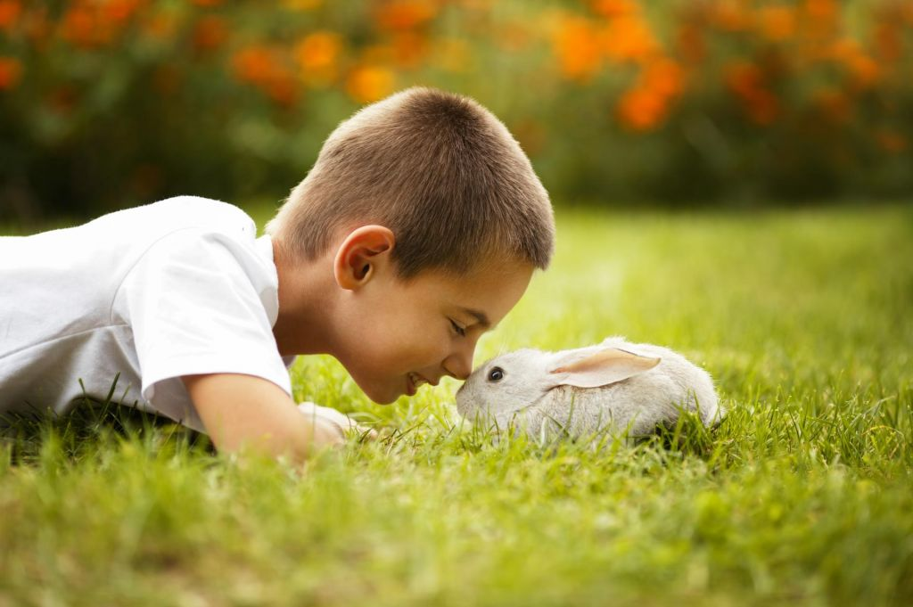 Zdrave živali, zdravi ljudje - to je naloga veterine