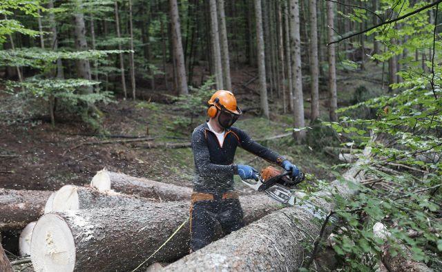 Učinki podnebnih sprememb že kažejo na nujnost novih ukrepov v upravljanju gozdov. Genetika je čedalje bolj uresničljiva možnost. FOTO: Blaž Samec/Delo