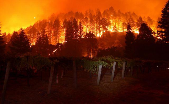 Požar Glass gori v hribih v bližini vinograda v St. Heleni v Kaliforniji, ki je požgal že več kot 2500 hektarov površin in uničil domove. FOTO: Justin Sullivan/AFP