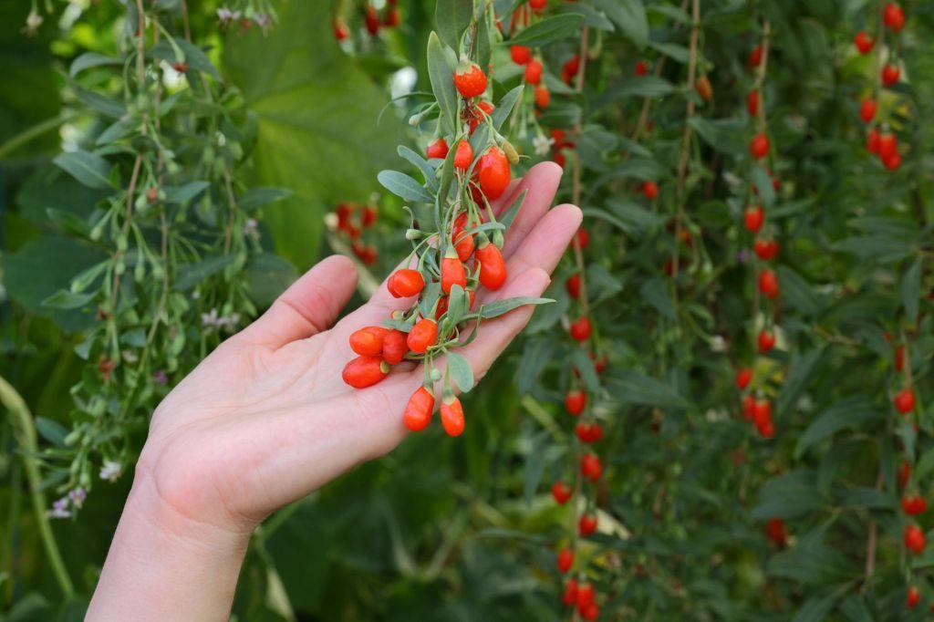 Prepovedani pesticidi se vrnejo z eksotičnim sadjem