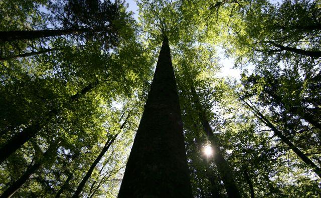 V osrčju Pohorja šele resnično dojamemo pomen pojmovanja drevesa kot starodavnega simbola življenja. FOTO: Roman Šipić/Delo