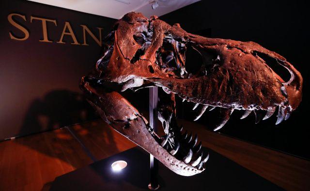 Glava 67 milijonov let starega okostja tiranozavra rexa<br /> FOTO: Mike Segar/Reuters