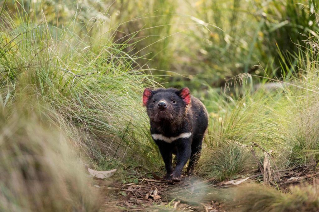 FOTO:Vragci se vračajo v celinsko Avstralijo