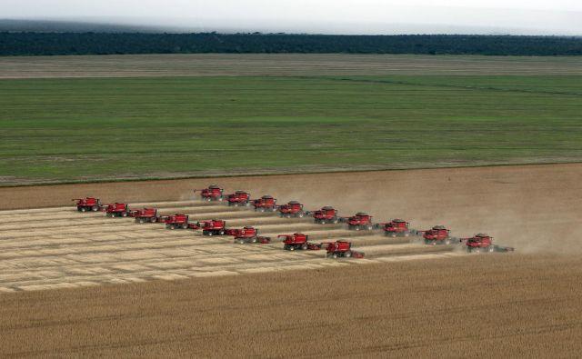 Evropa nadaljuje svoj dvolični odnos do gensko spremenjenih organizmov. Medtem ko so v dveh tretjinah držav članic ti delno ali v celoti prepovedani, je evropska komisija odobrila uporabo nove sorte gensko spremenjene soje za hrano in krmo na evropskih tleh. Na fotografiji so polja gensko spremenjene soje v Braziliji. FOTO: Paulo Whitaker/Reuters