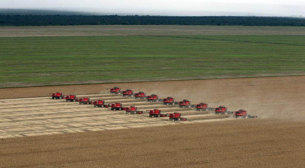 V Evropo prihaja nova sorta gensko spremenjene soje