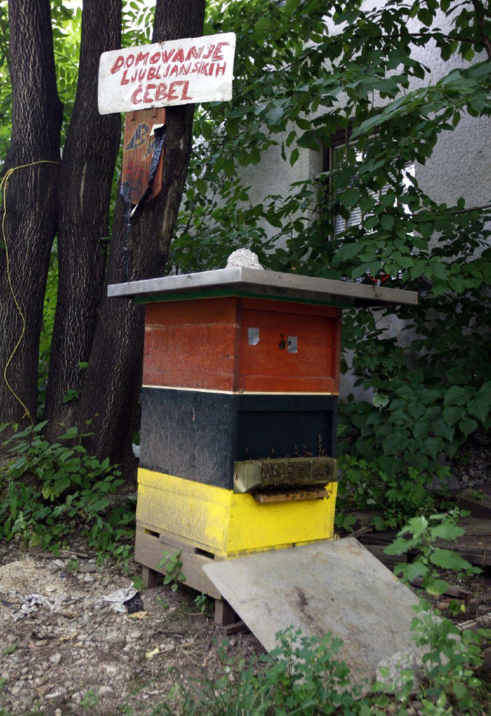 Mestno čebelarstvo: nič medu, samo čebele