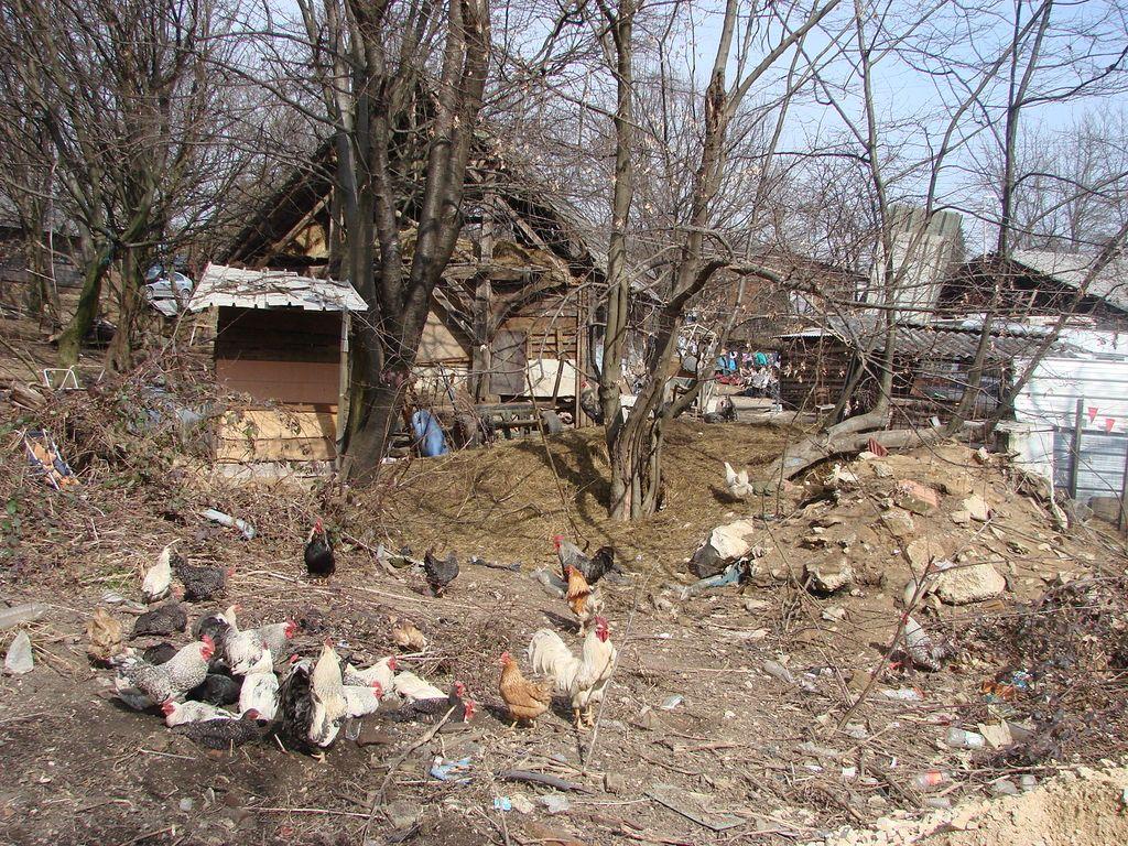Tri milijone evrov za romska naselja