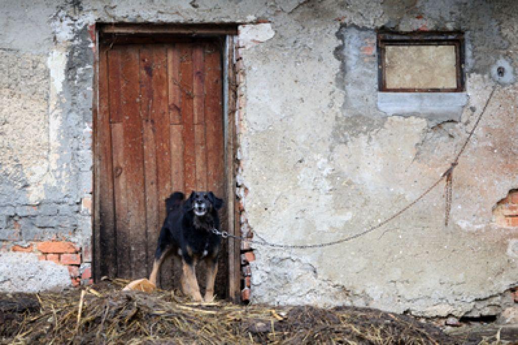 Samoobramba: ko napade pes