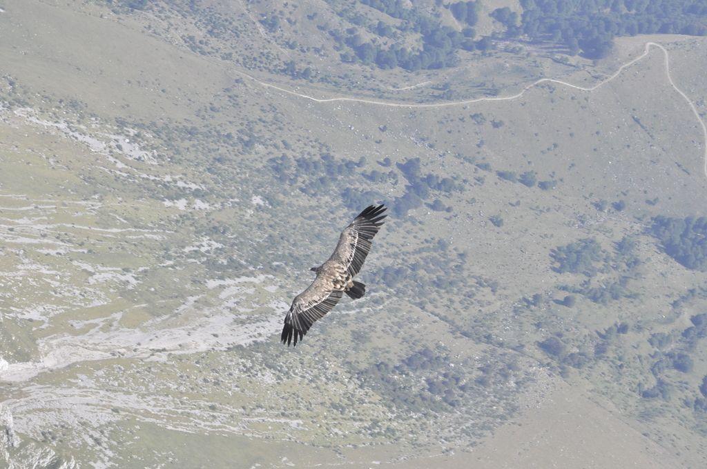 Širitev Nature zaradi ptice, ki je ni