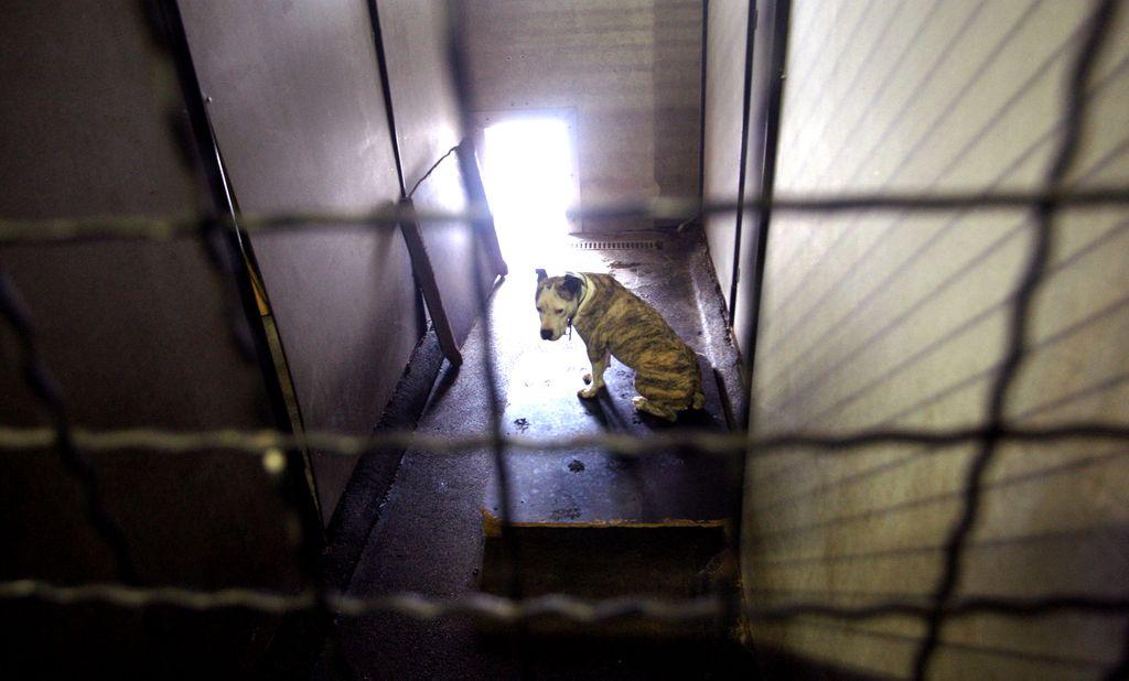 Lastniki živali bodo morali biti odgovornejši