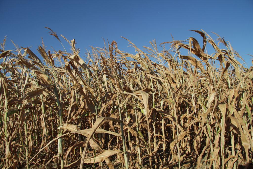 Prva pomoč kmetom za lansko sušo