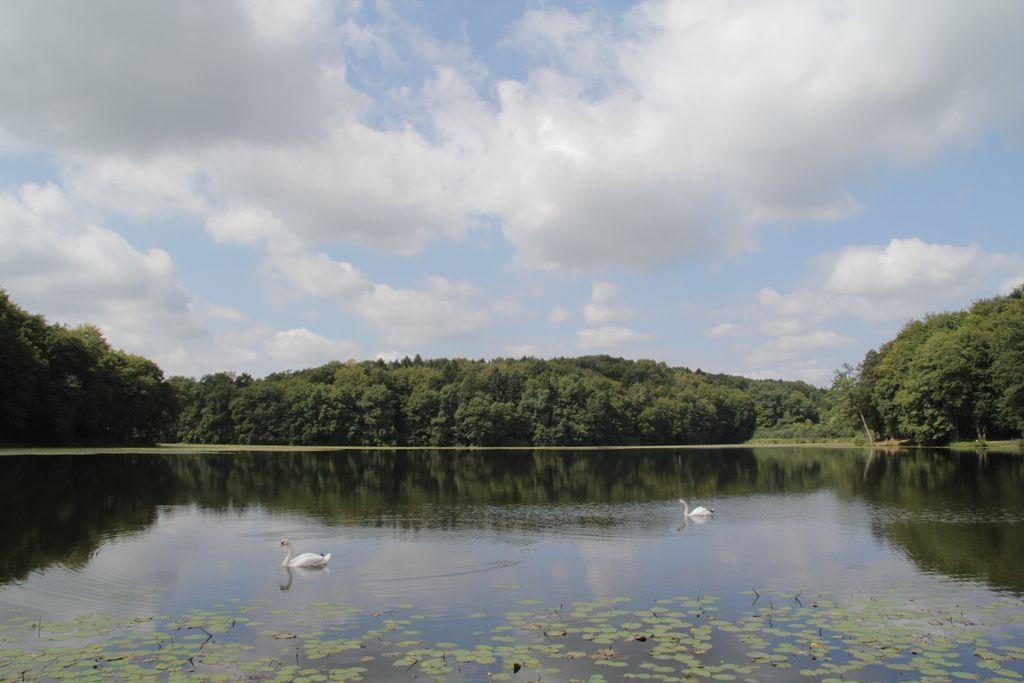 Negovsko jezero hočejo vrniti kopalcem