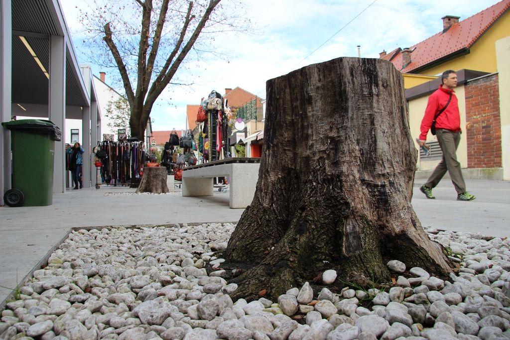 Dobljena bitka za celjska drevesa