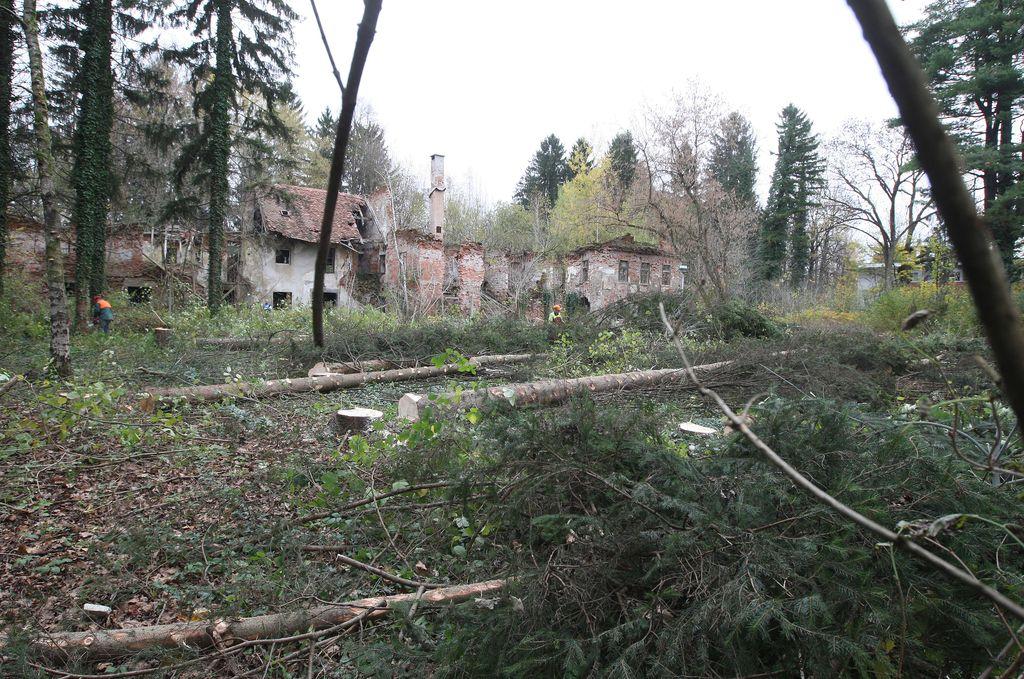 Karner na Viču začel izsekavati gozd