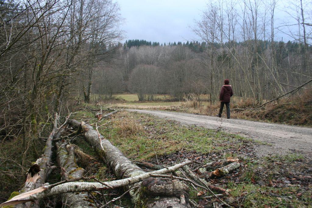 Občina prodala vasi, kjer so doma le medvedi