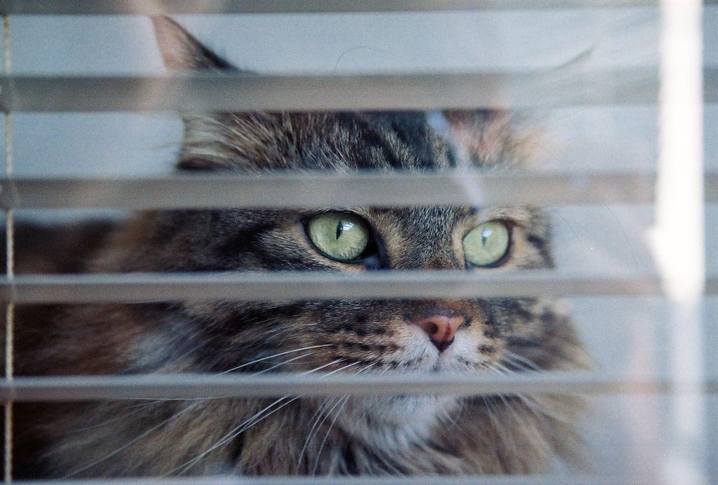 Tri stvari, brez katerih mačkam živeti ni