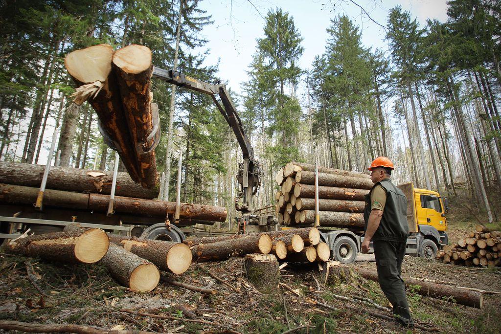 Izvozili za 13 odstotkov več lesa