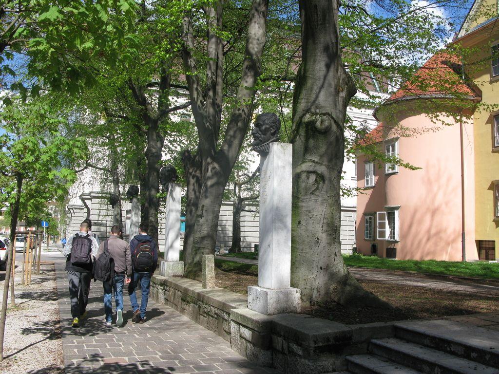 Visoke bukve v Plečnikovem parku v Vegovi so sporne