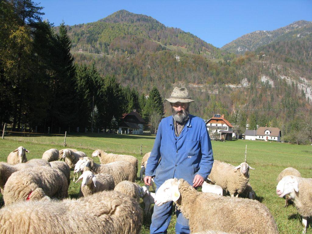 Namesto ovc na planinah ostajajo le zveri