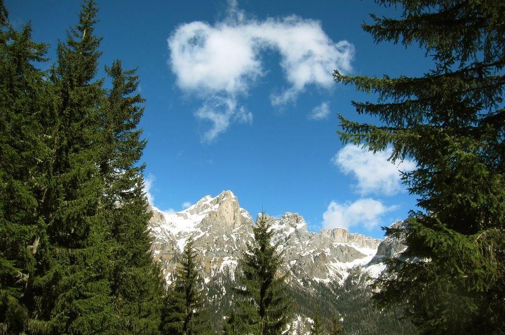 Koalicija za gozd zahteva javno obravnavo zakona o gozdovih