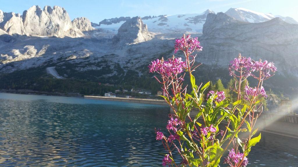 Na mladih gorovje Alpe oz. svet stoji