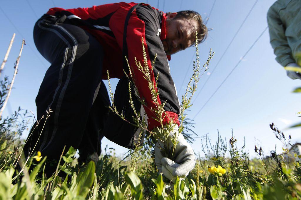 Bo botanična policija rešila biotsko pestrost?