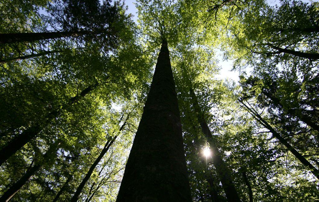 V Sloveniji sedež mehanizma s področja gozdarstva