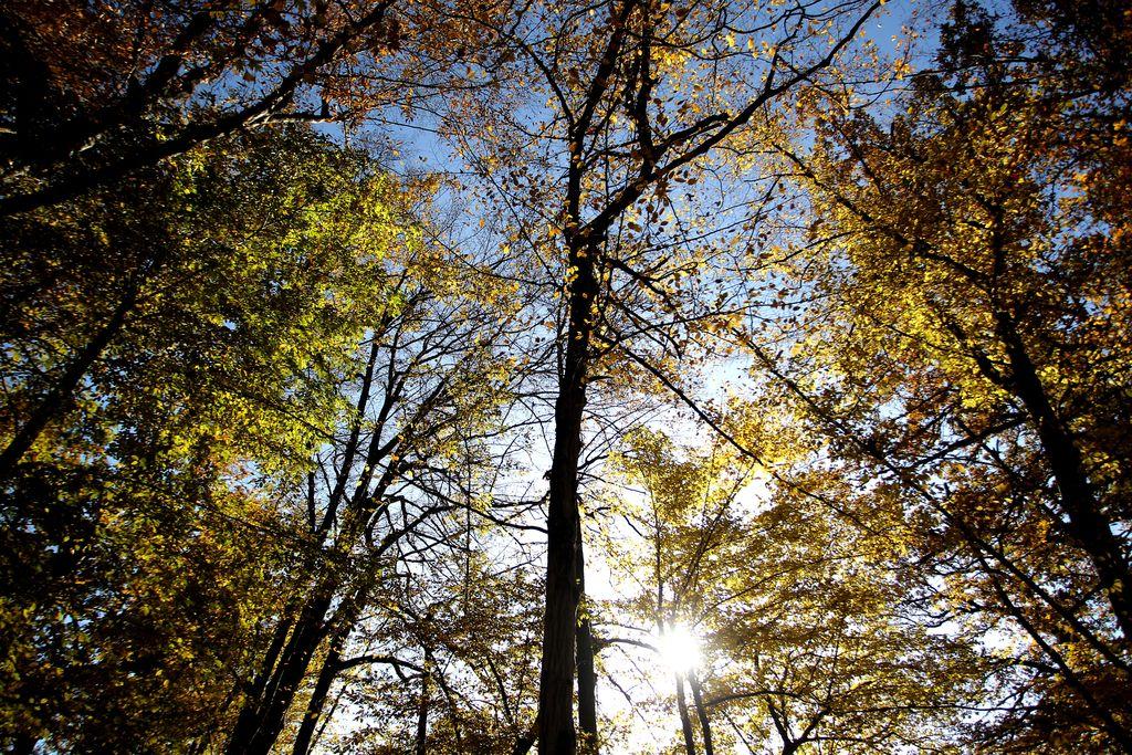 Drevesa – ne le stroji za kisik, ampak družabna bitja