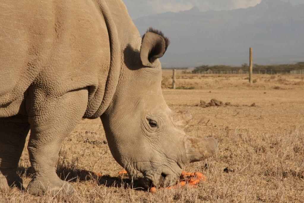 Bi raje imeli lamborghinija ali mladiča nosoroga?